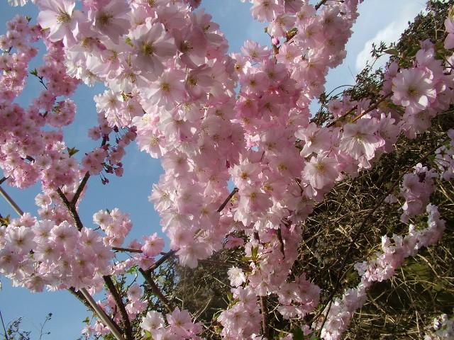 fionastolze spiritual path truth blossoms